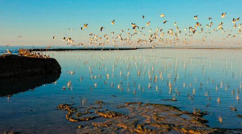 Chipiona Los Corrales, fishing Corrals, Korallenriffe