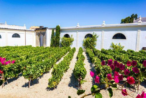 Jerez de la Frontera, bodega - viñas - vineyards - Sherry Weinreben
