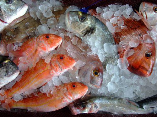 frischer Fisch im Casa Bigote Bajo de Guia